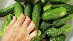 komkommers stock video