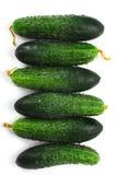 Komkommers Royalty-vrije Stock Afbeelding