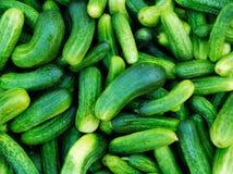 Komkommers Royalty-vrije Stock Afbeeldingen