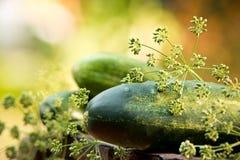 Komkommers en dille Stock Foto's