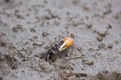 kommande krabbahål ut Arkivfoto