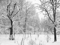 kommande vinter Royaltyfri Fotografi