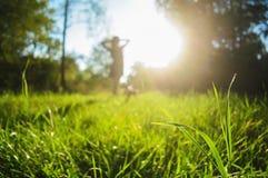 Kommen Frühling, Abschluss des grünen Grases oben und der helle Sonnenschein, Stockbilder