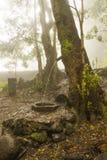 Kommende Baum der es verwässert Stockfoto