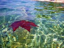Kommender Herbst auf der Küste lizenzfreie stockbilder