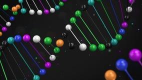Kommentera den färgrika modellen av DNAtråden på svart bakgrund lager videofilmer