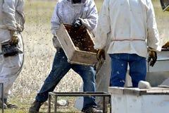 Kommersiellt biföretag: beekeepers på arbete Royaltyfria Foton