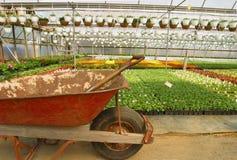 kommersiellt växthus Arkivbilder