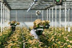 Kommersiellt växthus Fotografering för Bildbyråer