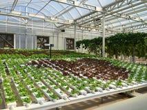 Kommersiellt växthus Royaltyfria Bilder