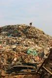 Kommunal avskrädeförrådsplats och den tunna hunden i nedgrävning av sopor miljö royaltyfria bilder