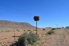 Kommunalvogel-Nest Stockbilder