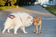 Kommunikation von zwei Hunden am Abendweg um die Stadt Lizenzfreies Stockbild