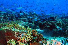 Komodo Coral Reef Stock Afbeeldingen