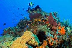 Komodo Coral Reef Royalty-vrije Stock Afbeeldingen