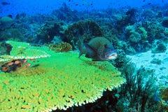 Komodo Coral Reef Royalty-vrije Stock Foto