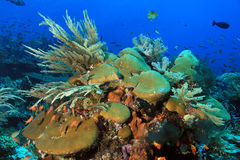 Komodo Coral Reef Stock Photography
