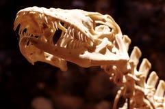Komodo Dragon 6 Stock Photos