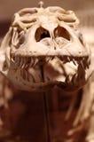 Komodo Dragon Royalty Free Stock Photography