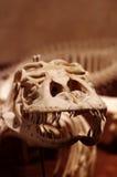 Komodo Dragon 2 Stock Photo