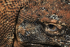Komodo dragon eye and scales. Extreme close up Royalty Free Stock Images