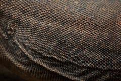 Komodo dragon (Varanus komodoensis). Skin texture Royalty Free Stock Images