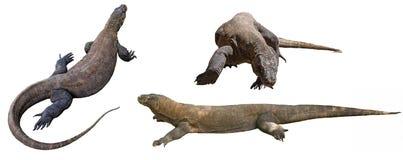 Komodo drakar i komodonationalpark Arkivfoton