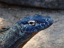Komodo impressionante grande Dragon In um retrato do close up fotografia de stock royalty free