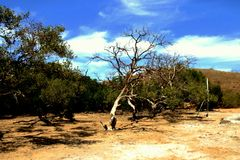 Komodo Island Arid Landscape Royalty Free Stock Image