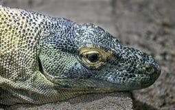 Komodowaran ` s Kopf Stockbilder
