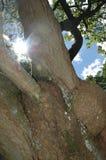 Komorebi imagen de archivo libre de regalías