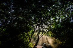 Komorebi Japanese for Sunlight Filtering Through Trees as Seen During a Safari in Minneriya National Park Stock Photography