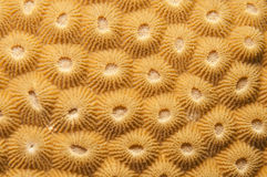 Kompakte korallenrote Beschaffenheit Stockfotos