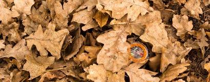 Kompas pod suchymi dębowymi liśćmi Fotografia Royalty Free