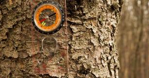 Kompass auf dem Stamm einer Kiefer Stockfoto