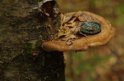 Kompass på den wood champinjonen Arkivbild