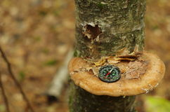 Kompass på den wood champinjonen Arkivfoton