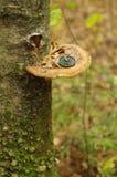 Kompass på den wood champinjonen Royaltyfri Foto