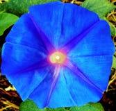Kompilacja kwiaty makro- 4 obraz royalty free