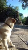 Kompis hunden royaltyfri foto