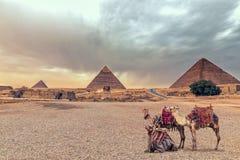 Kompleks Giza ostrosłupy i sfinks w pustyni z wielbłądami, Egipt fotografia stock