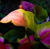 Komplex färgrik sammansättning av exotiska blommor och ljus arkivbilder