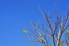 Komplex tree Royaltyfri Fotografi