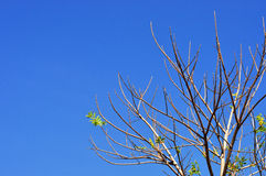 Komplexer Baum lizenzfreie stockfotografie