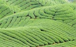 Komplizierte Landform- und Teebäume Stockfotos