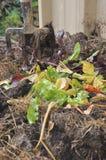 Kompost Zdjęcie Royalty Free