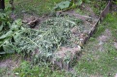 Kompost Royaltyfria Foton