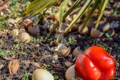 Kompostfack i tr?dg?rden Composting av h?gen av ?gg-, frukt- och gr?nsakrester arkivbilder
