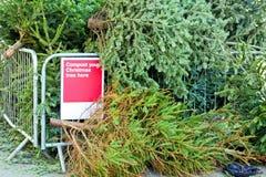 Kompostierung des Weihnachtsbaums Stockbilder
