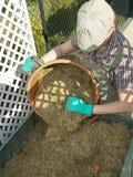 Kompostowy kosz Obraz Royalty Free